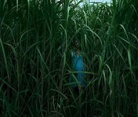 In the Tall Grass     seslendirme