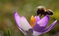 İlkbahar Öyküleri Belgeseli
